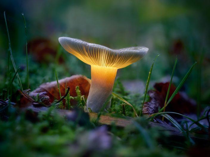 Fungus Enlightening